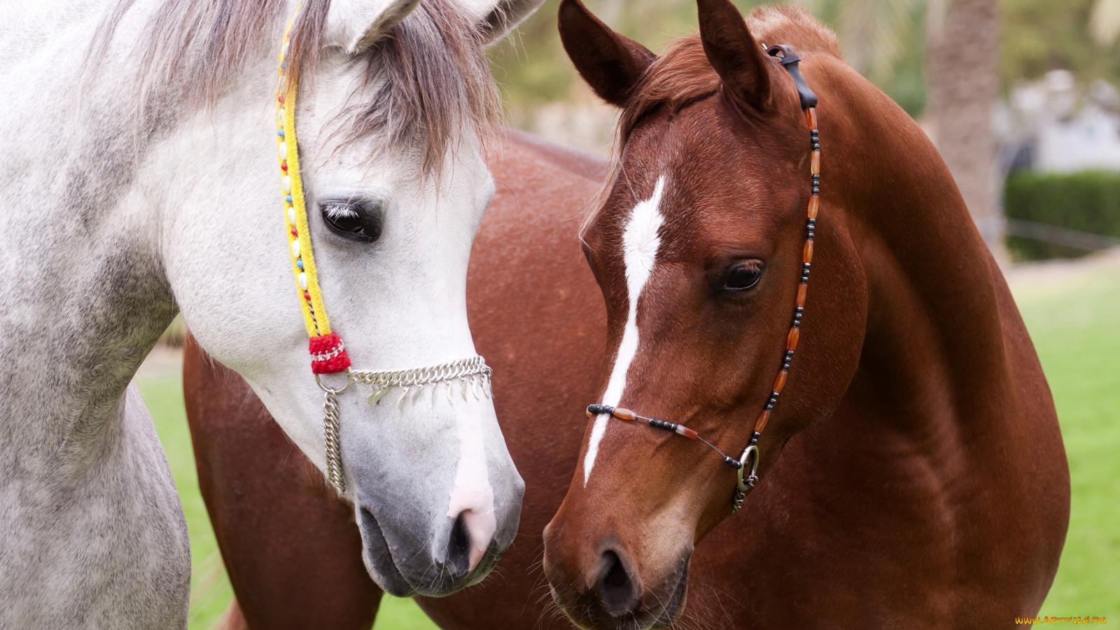 К чему снится лошадь беременной женщине